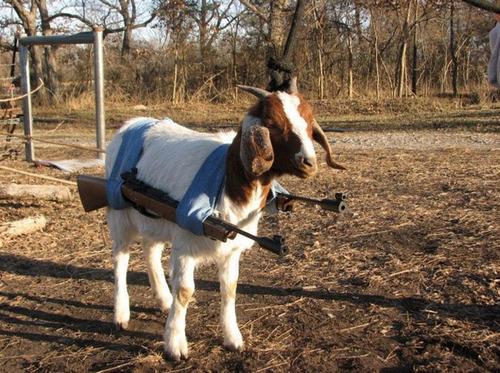 Simulador de Cabra