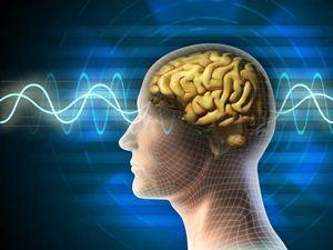 Makanan yang Bisa Meningkatkan Kecerdasan Otak