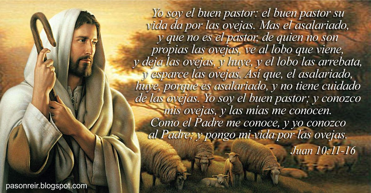 Yo soy el buen pastor; el buen pastor su vida da por las ovejas