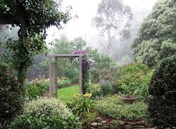 My Misty Garden