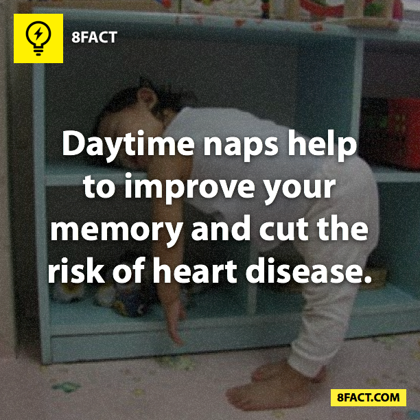 daytime naps facts