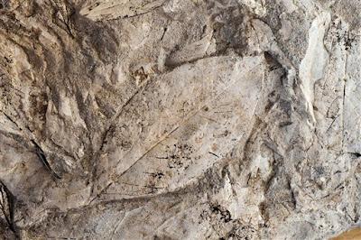 Το Απολιθωμένο Δάσος Λέσβου έρχεται στην Αθήνα