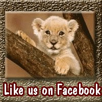 "Follow The ""Pride"" On Facebook"