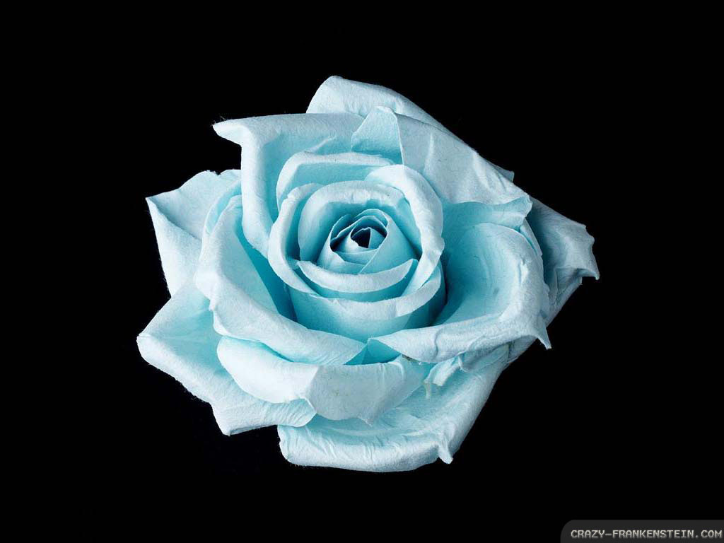 flower tattoos collections: Blue Rose Tattoo Meaning