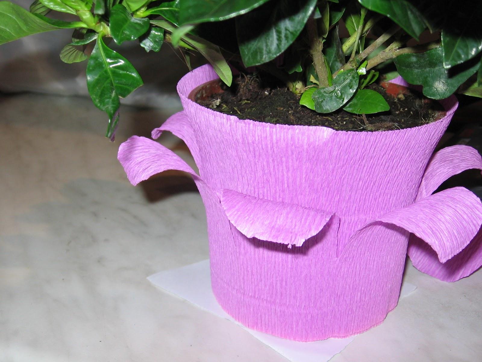 Dalla a allo zucchero come ricoprire il vaso di una pianta for Pianta con la i