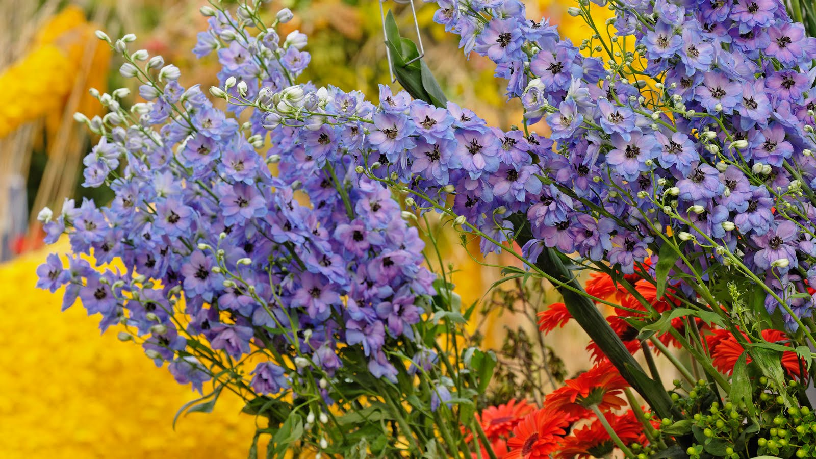 Flores, De, Jardín Imágenes gratis en Pixabay