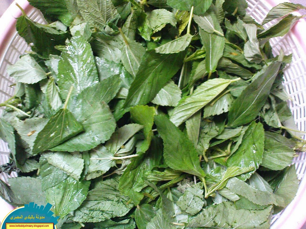 تعرف على فوائد نبات الملوخيه الهائله واهميته الصحيه والعلاجيه