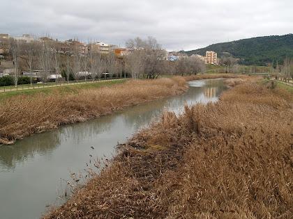 El cantó de llevant del riu Anoia des del Pont Gran de Can Titó