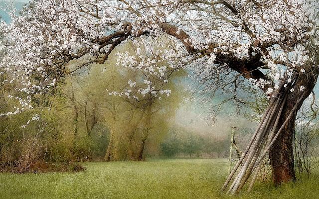 spring landscape photo hd, spring landscape image, spring landscape picture, spring landscape background, spring landscape desktop pc wallpaper, spring landscape high quality wallpaper