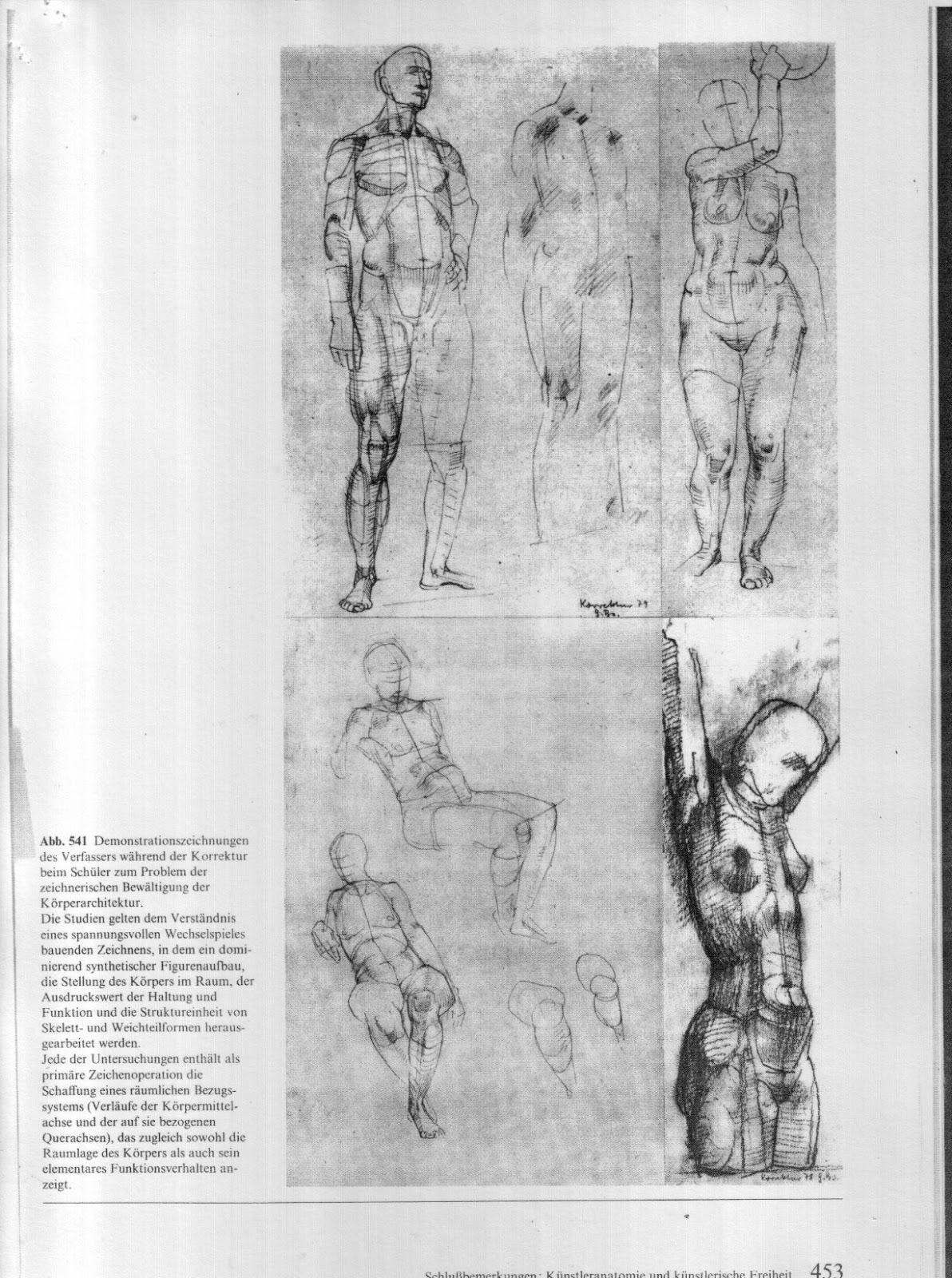 Polka Lines: Anatomy (by Gottfried Bammes)