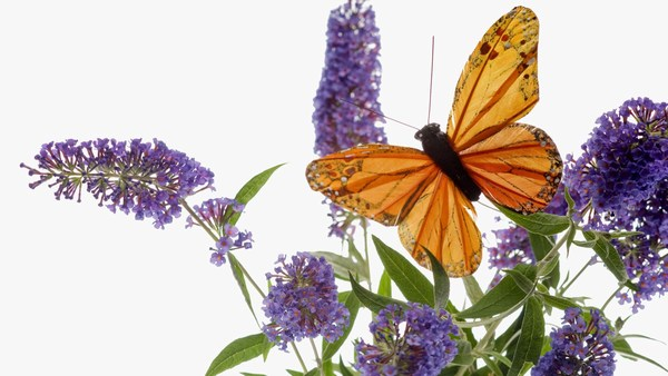 Beautiful Butterfly HD Images New