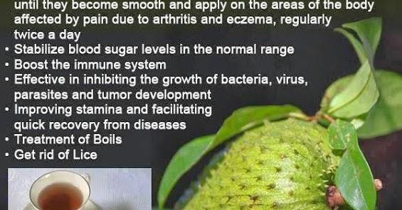 Image Result For Graviola Benefits The
