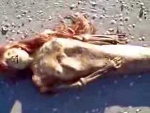 foto putri duyung terdampar - gambar hewan