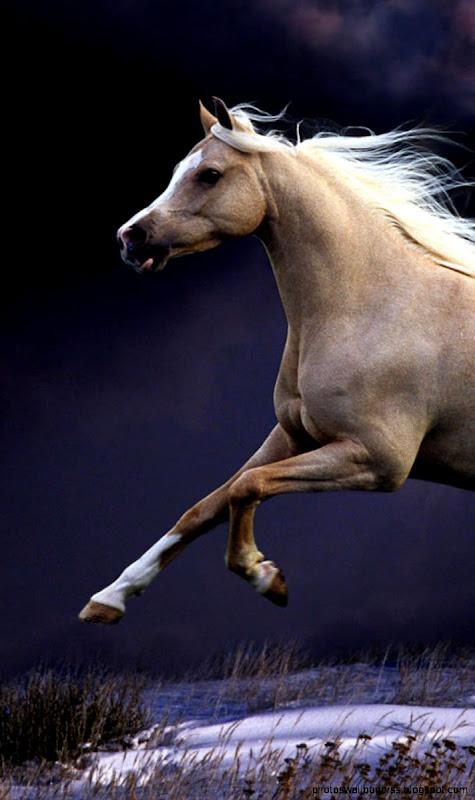 View Original Size Running Horse IPad Air Wallpaper Download IPhone Wallpapers