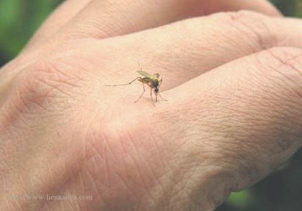 Cara Menghilangkan Bekas Gigitan Nyamuk