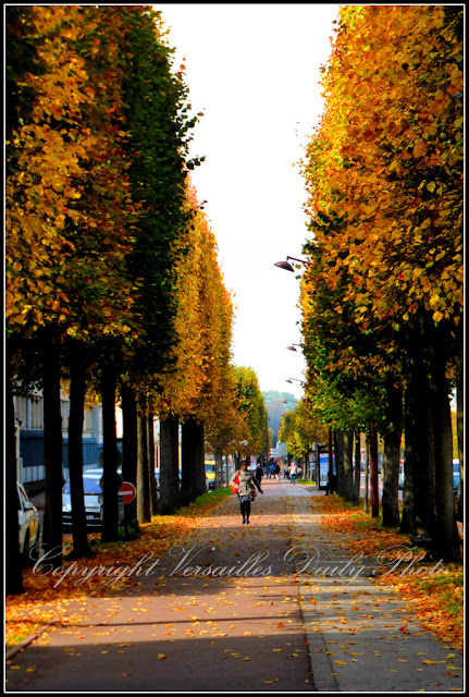 Automne boulevard de la Reine Versailles