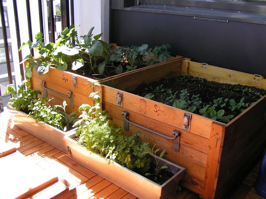 odla på balkongen