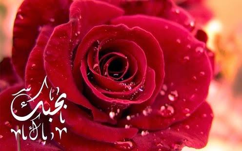 مسجات وصور الحب للاندرويد