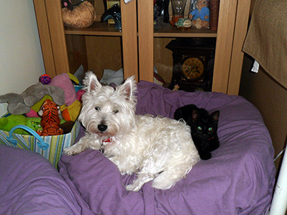 Black kitten Lily with dog Megan