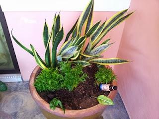 Tips Mengemas Dan Membaja Pokok Bunga