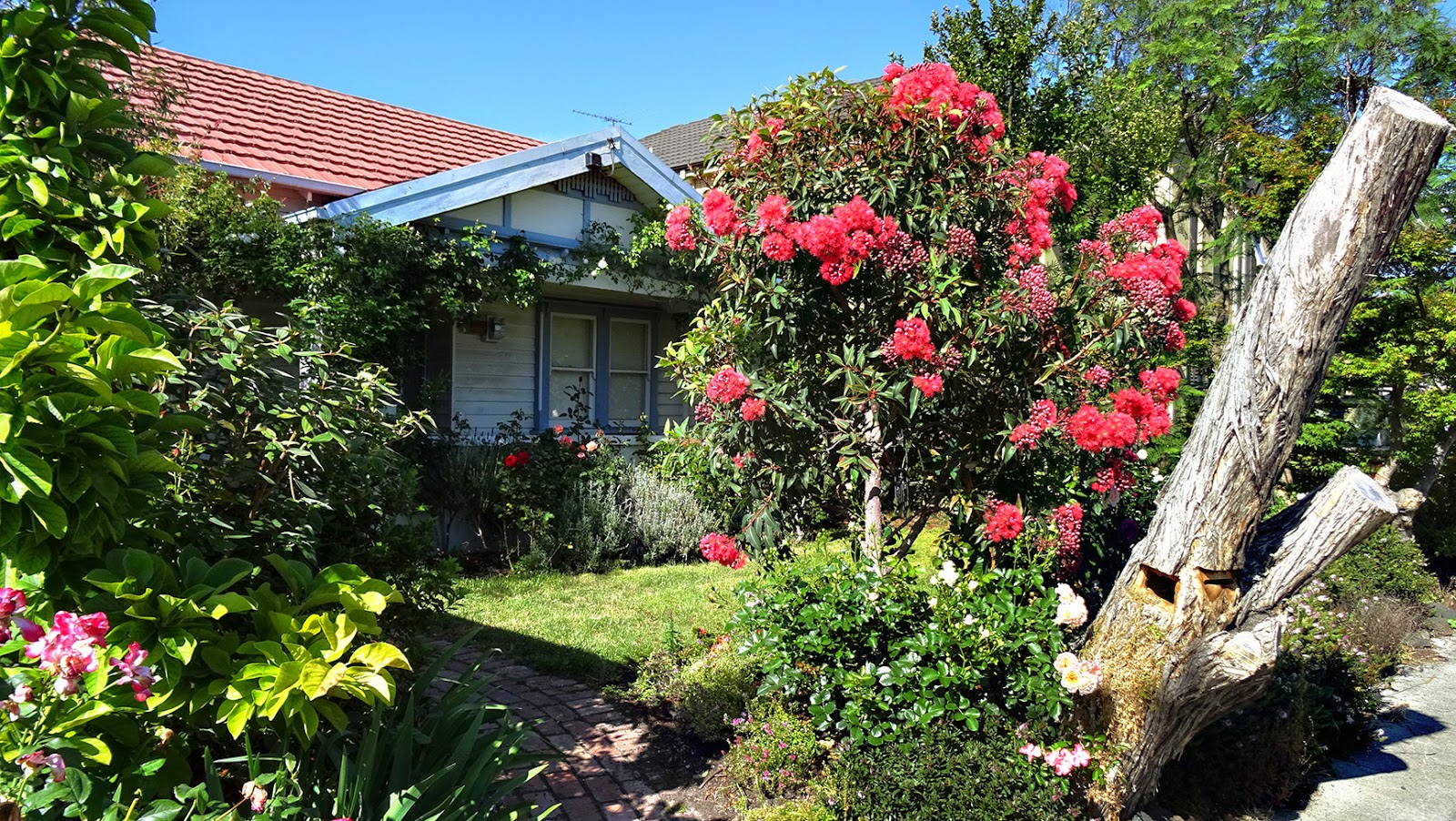 Map melbourne street trees 97 pink flowering gum we saw this lovely specimen at its very blooming best during our christmas morning walk around the neighbourhood merry christmas to all mightylinksfo