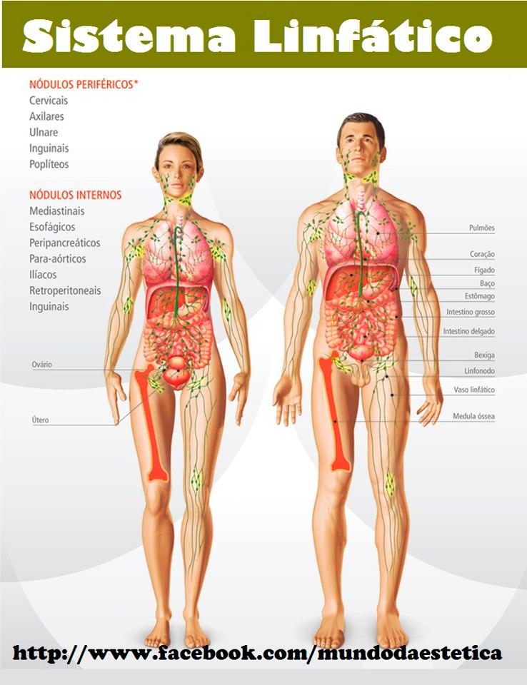 Sida Estética: NOSSO SISTEMA LINFÁTICO