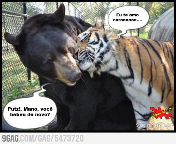 tigre, urso, bebado, eeita coisa