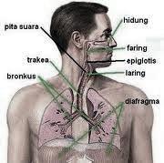 obat penyakit paru paru yang mujarab