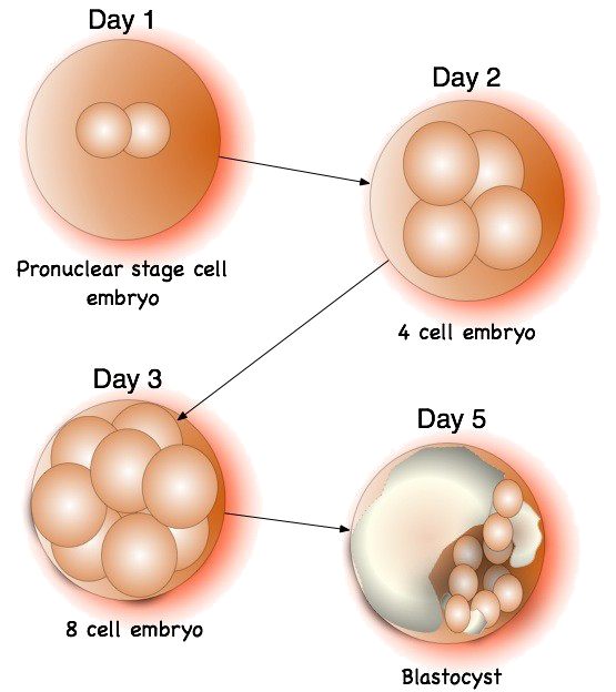why should human cloning be prohibitted To evade this criticism, proponents are now beginning to claim that human cloning for purposes of research does not create human embryos, but only activated cells others are urging that the term cloning should not even be used to refer to this process.