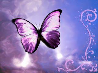 mariposa lila