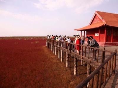 شاطئ الدماء بالصين 2013_02_image2013_02