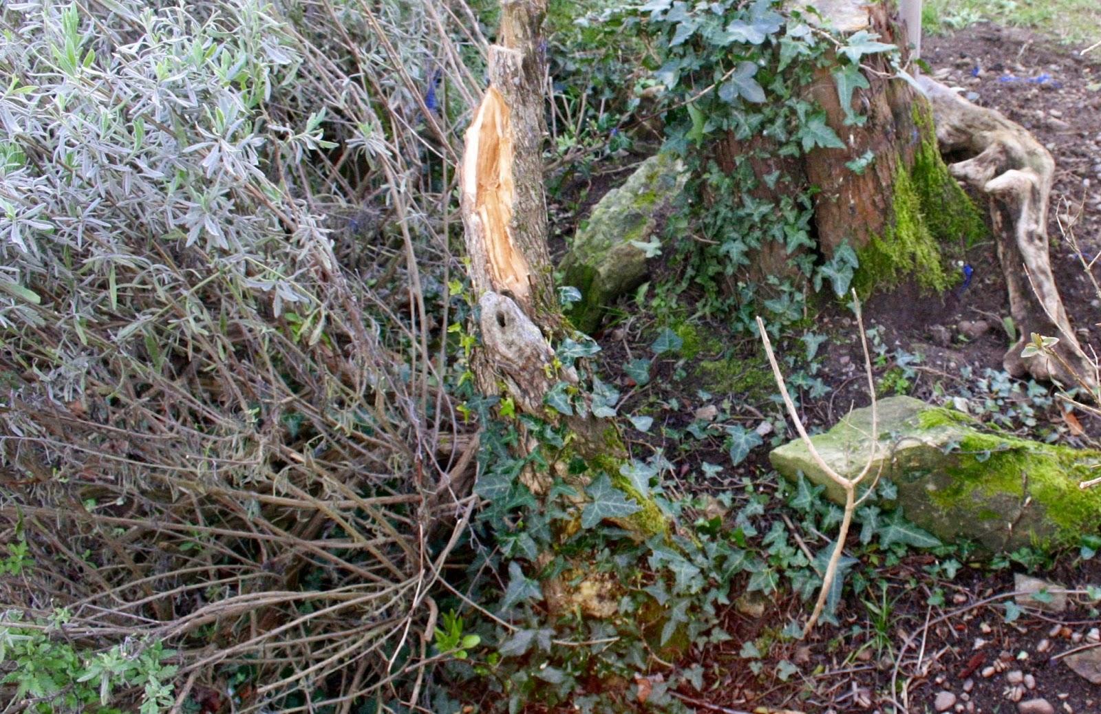 El jard n de margarita cosas de la natura lluvia y for Jardin y natura
