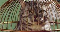 pantun minangkabau kucing dalam sangkar burung