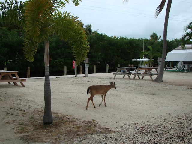 Key west road trip for Big pine fishing lodge
