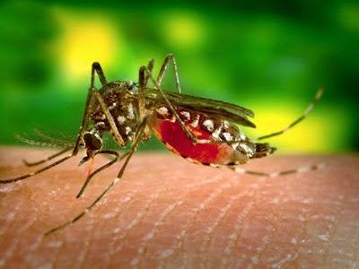 Inilah Sebabnya Orang Sering Digigit Nyamuk