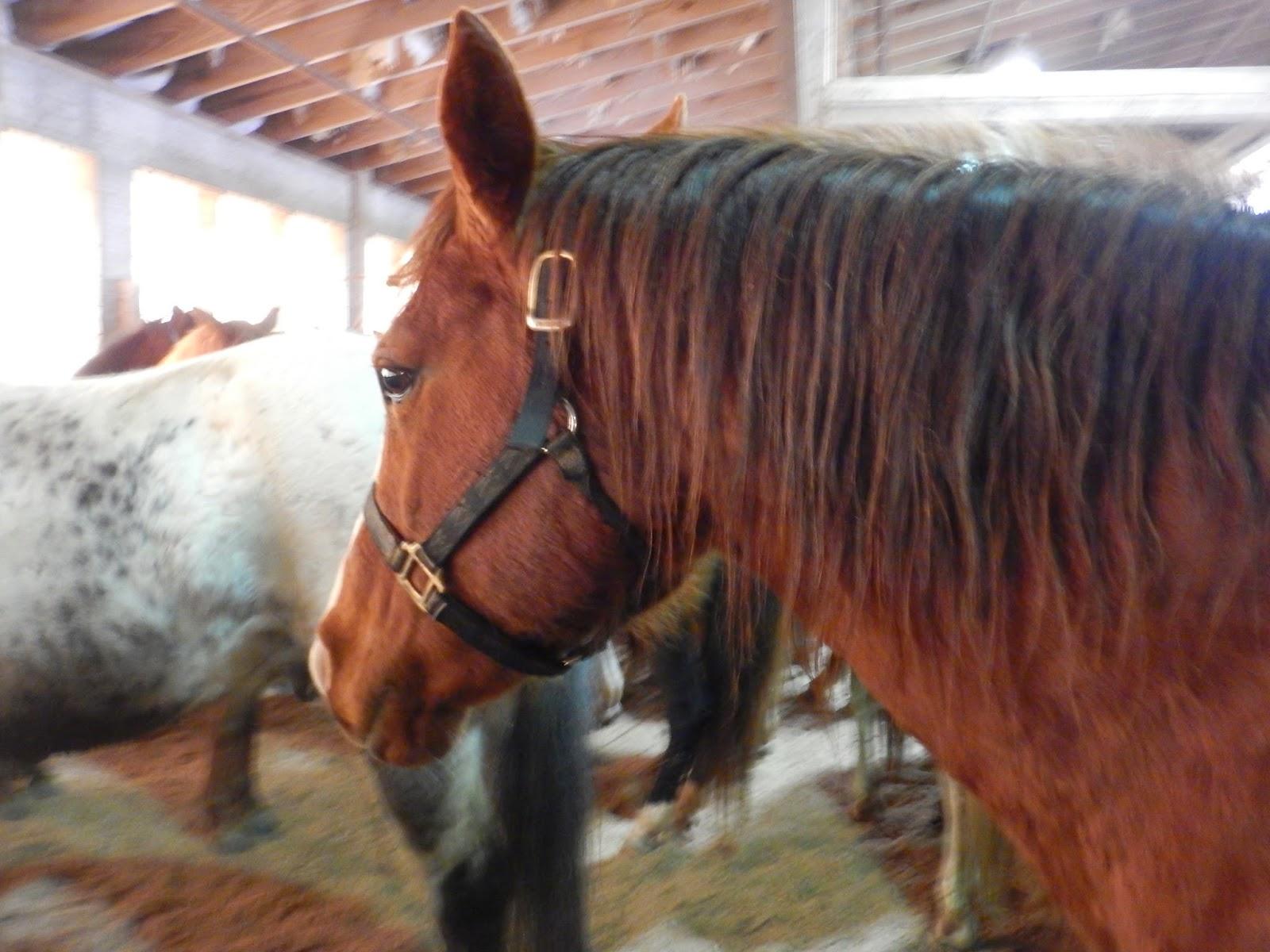 Good   Wallpaper Horse Flicka - DSCN1008%5B1%5D  Image_1285.JPG