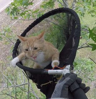 Kitty in net hanging on the rim and crying