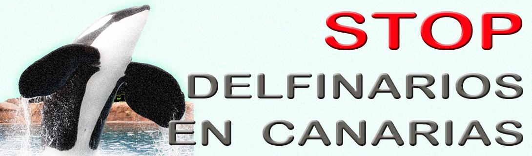 Stop delfinarios en Canarias