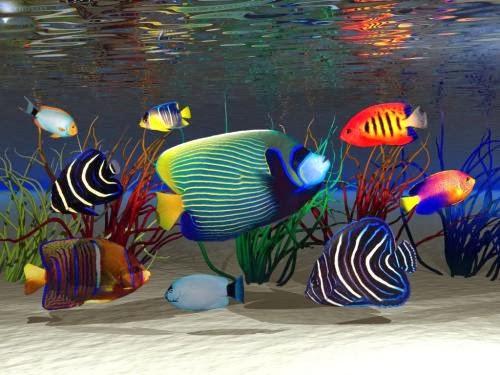 جعل سطح مكتبك تسبح فيه الأسماك