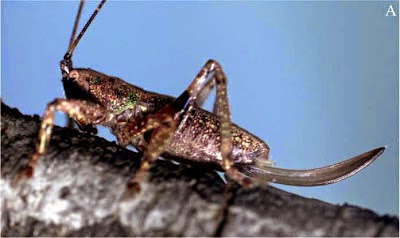 http://sciencythoughts.blogspot.co.uk/2012/11/four-new-species-of-katydid-from.html