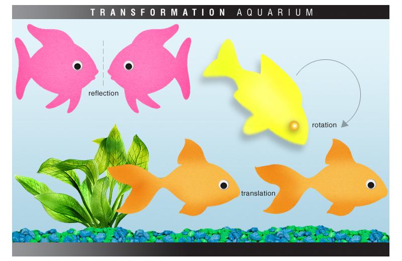 is for Explore!: Transformation Aquarium