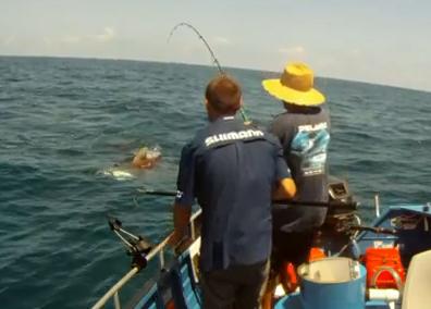 australia+shark+sharks+white+attack+attacks+giant+trevally+video ...