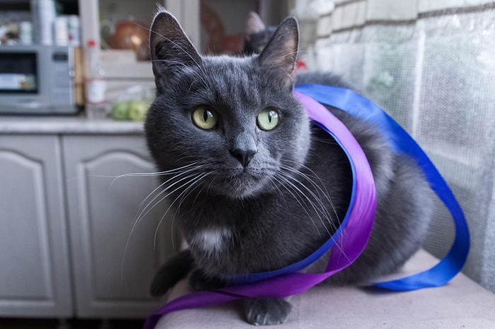 Фото 1 из Catmoji - социальная сеть для котов