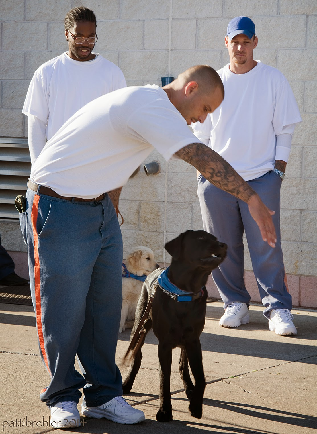 A man wearing blue prison pants with a white t-shirt is leaning forward with his right arm stretched out in front of a black lab's nose. The man is looking down at the dog. The lab is standing at the man's left side and is looking at the man's open right palm. The lab is wearing the blue Future Leader Dog bandana. There are two other men standing behind the first man watching the man and dog. They are wearing blue prison pants and white t-shirts. The man on the left is african american and is wearing glasses, the man on the right is wearing a blue baseballc am and has his hands in his pickets. The are outside in bright sunlight, casting long shadows to the right, and in front of a white brick wall.