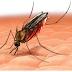 QUININE Saves the Man Against Malaria
