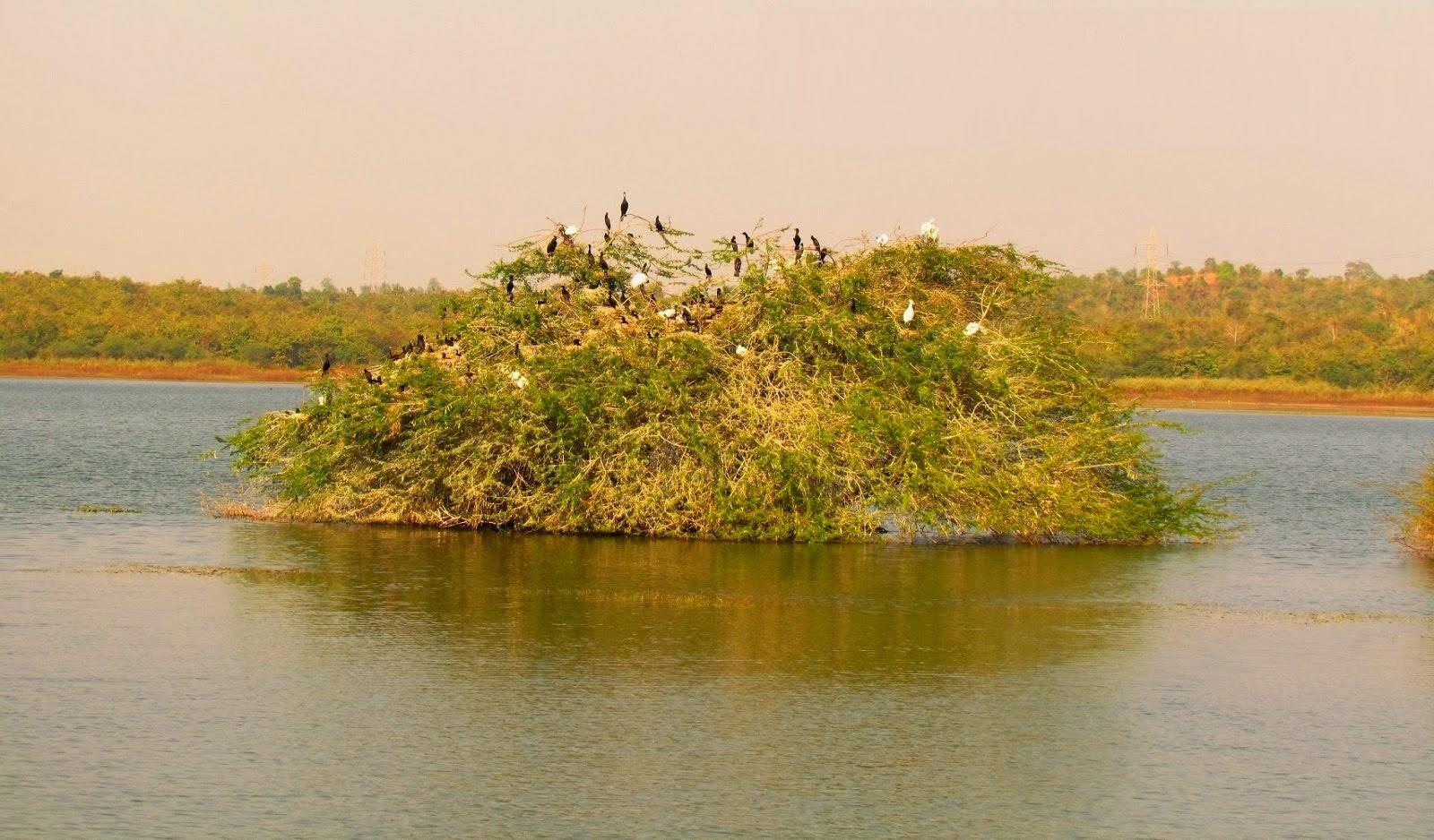 Attiveri Birds Sanctuary Sirsi Attractions