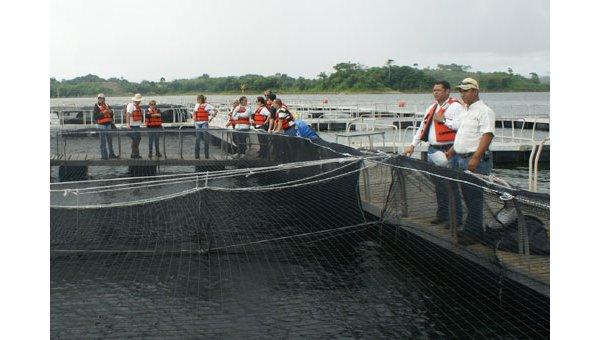 Acuicultura en panama crece producci n de tilapia en for Construccion de jaulas flotantes para tilapia