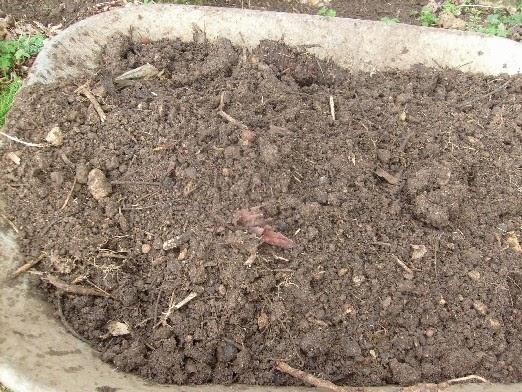 Du microorganisme végétal par le pied des pieds