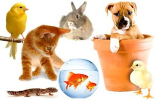 cara-memilih-hewan-peliharaan_3265487