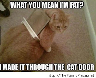 Funny cat sayings whatyou mean i'm fat